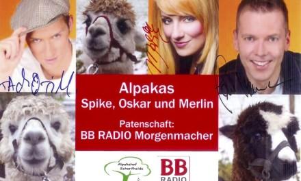 Die BB RADIO Morgenmacher als Alpaka-Paten