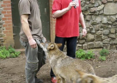 """""""Herrmännchen oder Herrmannkules?"""" im Zoo"""